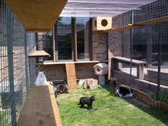 Safe, Friendly Cat and Dog Enclosures Cat Run, Dog Enclosures, Cat Habitat, Outdoor Cats, Outdoor Spaces, Outdoor Cat Enclosure, Cat Hotel, Space Cat, Cat Furniture
