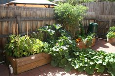 living in the city doesn't give you a lot of space for a garden. will have one though.