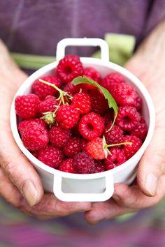 organic raspberries - yum!
