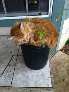 Springtime is an ideal season for cat plants. 21 Very Important Cat Plants Kittens Cutest, Cats And Kittens, Cute Cats, Funny Cats, Funny Animals, Cute Animals, Crazy Cat Lady, Crazy Cats, Cat Plants