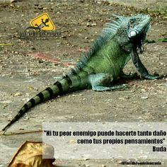 """""""Ni tu peor enemigo puede hacerte tanto daño como tus propios pensamientos """" #Buda #AllTerrainPeopleVenezuela ❤ #venezuelatequiero #life #love #kayak #skate #rutas #extremo #parapente #diquevalencia #quehaceshoyporvenezuela #wandere #allterrainpeople #naturaleza #gopro #paraísoterrenal #canaima #trekking #lucha #noalmaltratoanimal #igersvenezuela #paisajes #venezuelasomostodos #justicia #prayforvenezuela #sosvenezuela #adelantevenezuela"""