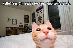 Who doesn't like to take selfies? This time not celebrities, sports personalities and human but funniest pics of cats taking selfies will shock you. Enjoy the awesome and funny cat selfies. - Page 2 of 3 Love Dogs, I Love Cats, Cute Cats, Selfies, Funny Cat Pictures, Animal Pictures, Funny Photos, Funniest Pictures, Baby Cats
