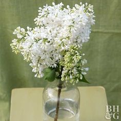 Angel White Create elegance in your garden with the pure white clusters of 'Angel White' blooms. It offers large, very fragrant flowers that have recurved petals, giving them a very unusual look. Name: Syringa 'Angel White' Light Blue Flowers, Big Flowers, Colorful Flowers, White Flowers, Beautiful Flowers, Beautiful Gardens, Wedding Flowers, Night Garden, Moon Garden