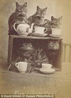 """Even in the 1870 we were taking mad pic's of our pets, """"Tea any one?"""""""