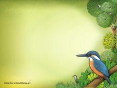 Ledňáček Illustrators, Bird, Animals, Animales, Animaux, Birds, Animal, Birdwatching, Illustrations