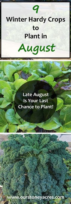 August Planting Guide #5 - Late August is your last chance to get these 9 winter hardy crops planted in your fall and winter garden!