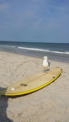 Surfing Seagull...Seaside Park NJ