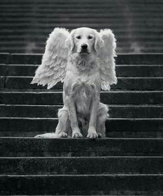 Dog got his wings...
