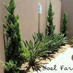 Canteiro charmoso para seu escritório #jardim #garden #gardening #jardinagem #paisagismo #floricultura #plantas