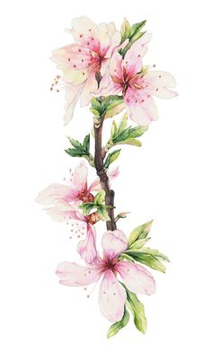Watercolor Illustrations of blooming branches