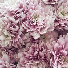 Yes please @designsponge #colorpalate #florals #prettyinpink