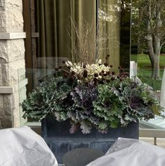 observations of a landscape designer Fall Plants, Green Plants, Tropical Plants, Autumn Garden, Summer Garden, Green Landscape, Landscape Design, Eucalyptus Centerpiece, Topiary Plants