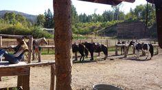 Heart Sixt Ranch #GrandTeton #OuestAmericain #Ranch
