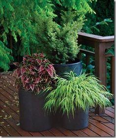 041105096_taxus_coleus_med Garden Club, Garden Art, Garden Design, Garden Ideas, Garden Plants, Potted Plants, Terrace Garden, Shade Plants, Garden Inspiration