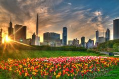 Springtime in Chicago