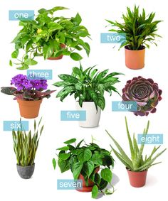 8 Houseplants That Are Impossible To Kill