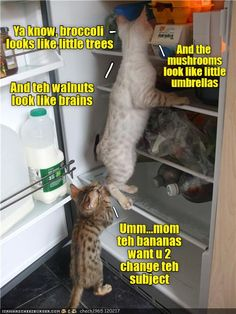 Ah...now I know why cats hate cucumbers... http://cheezburger.com/9009790976