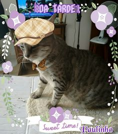 Meu lindo gatinho Paulinho!