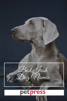 Find out the best Irish dog name ideas to inspire you