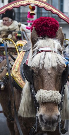 CABALLOS ADORNADOS - Horse & carriage, Chamonix, France -----  a different critter experience...elegant, beautifully adorned