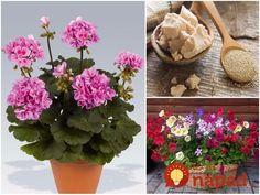 Kvety sú najkrajšie rastliny, ktoré nám zdobia nielen záhrady, ale aj naše domácnosti. Na to, aby naše rastliny prosperovali a rástli do krásy nepotrebujete drahé produkty zo záhradkárstva a umelé hnojivá od výmyslu sveta. Cabbage, Vegetables, Plants, Cabbages, Vegetable Recipes, Plant, Brussels Sprouts, Veggies, Planets
