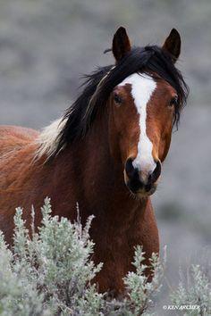 Wild Horse...thats a beauty http://www.google.com/imgres?hl=en=2=113467842596808954791=1280=905=isch=aCjbRNmjDHZnuM:=http://kenarcherphotos.com/p756444571/h11BD59A3=7j8eq2az6LB_lM=1=http://kenarcherphotos.com/img/s11/v30/p297621923-3.jpg=300=450=9iA7T6jtIenZiALPxPSSDA=1=hc=330=131=44=275=183=93=147=1=179=129=0=20=1t:429,r:1,s:0