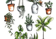 A Pair & A Spare | How to Care for Indoor Plants
