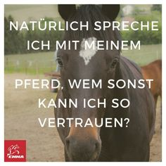 NATÜRLICH SPRECHE ICH MIT MEINEM PFERD!! LIKE & SHARE!  Besuche uns! Horse Riding Pants, Trail Riding Horses, Horse Riding Quotes, Horse Riding Tips, Horse Quotes, Horseback Riding Outfits, Horseback Riding Lessons, All About Horses, Equestrian Problems