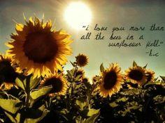 quotes sunflowers sunflower love quotes sunflower quotes and sayings Sunflower Garden, Sunflower Art, Sunflower Fields, Sunflower Quotes, Sunflower Pictures, Daisy Wallpaper, Sunflower Wallpaper, Sunflowers And Daisies, Sun Flowers