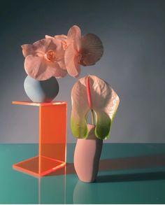 Still Life Photography, Art Photography, Foto Still, Guache, Flower Aesthetic, Arte Floral, Ikebana, Pretty Flowers, Art Direction