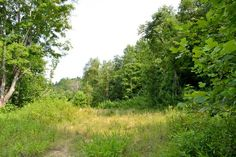 Land for Sale near Strunk, Kentucky - McCreary County  - 175 acres - 1094967 (kentucky-tennessee border just west of 75)