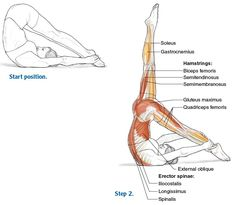 Fine Articulation for a Flexible Spine - Pilates Anatomy Acro Yoga Poses, Pilates Poses, Yoga Moves, Pilates Mat, Quadriceps Femoris, Yoga Muscles, Free Yoga Videos, Yoga Dance, Yoga Positions