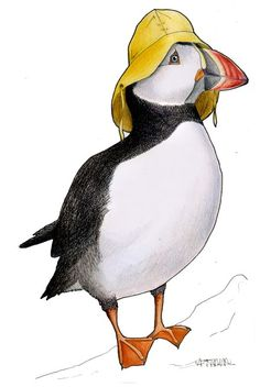 Birds in Hats.: Atlantic Puffin in a Sou'wester