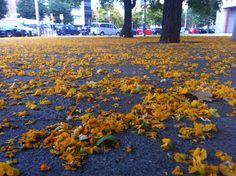 Matins de primavera a l'Avinguda Bogatell (Barcelona)