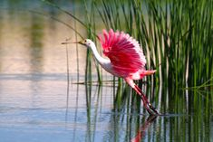 The beautiful birds are also entertaining. Enjoy them during your Florida vacation from www.beachrentals.mobi
