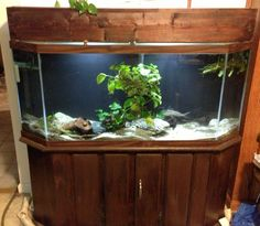 Awesome Aquarium Stands Design ~ http://www.lookmyhomes.com/choosing-the-aquarium-stands-of-metal-and-wood/