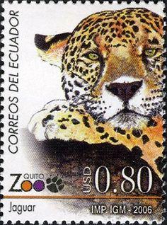 Jaguar Ecuador, 2006