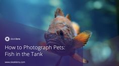 How to Photograph Pets: Fish in the Tank
