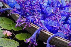 boat of blue lilies by Van in LA, via Flickr