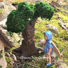 Let me help your fairy garden dreams come true!