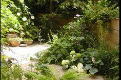 Carolien Barkman - Tuinen - Schaduwtuin Landscape Design, Garden Design, Starting A Garden, Natural Garden, Small Gardens, Go Green, Shade Garden, Garden Inspiration, Beautiful Gardens