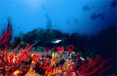 Riy Banks on Saturday morning, hope the weather & viz hold up dive site Port Elizabeth South Africa, Cruise Port, Red Sea, Car Rental, Scuba Diving, Natural Beauty, Ocean, Places, Nature