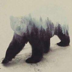 Wood burning idea. Bear, trees