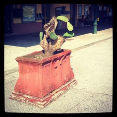 Italian pot #plant @ #Pisa Rossore station #potplant Photo by @Judith_FineArt
