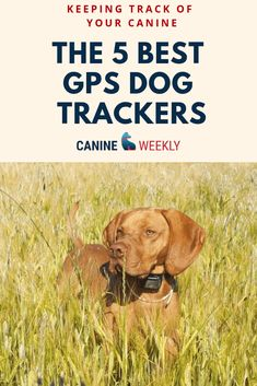 The 5 Best GPS Dog Trackers: Keeping Track of Your Canine. The dog accessories to make finding pet easier if they become separated. Dog Training Methods, Basic Dog Training, Dog Training Techniques, Training Your Puppy, Training Dogs, Puppy Obedience Training, Positive Dog Training, Easiest Dogs To Train, Dog Behavior