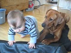 My hubby wants a Rhodesian Ridgeback. I had concern about puppy vs. baby. How can I after seeing this?