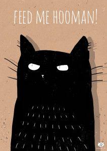 black cat www.bubazaur.com