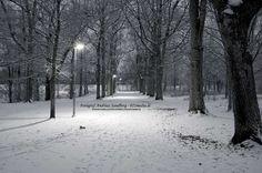 Vinter promenad i Tammskaparken