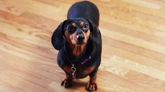 4 Awesome Inventions / Gadgets For Your Dog https://youtu.be/Ci3mFft4j0s