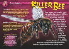 Toxic terrors Card 1 - Killer Bee